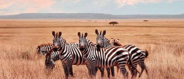 Chobe, circuit Tour du Monde des Sites Naturels
