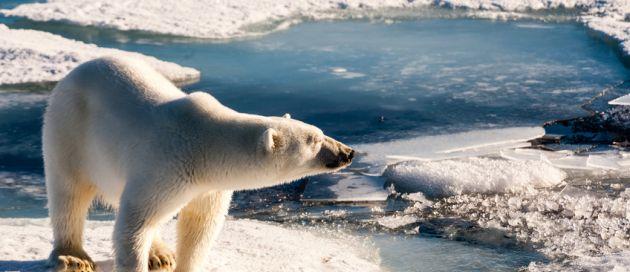 Groenland, Connaisseurs du voyage, Tour du Monde
