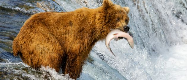 Alaska, Tour du Monde Terres du Grand Nord