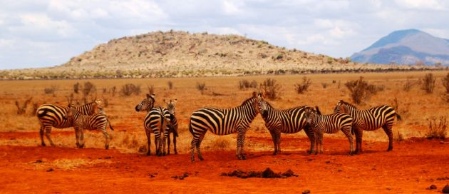 Chobe, Botswana, Tours du Monde