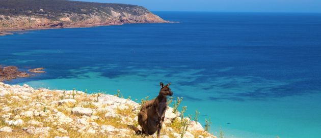 Kangaroo Island, Grands Trains du Monde, Australie