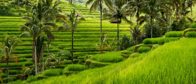 Bali, Lune de Miel Autour du Monde