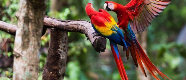 Costa Rica, Tours du Monde Contours du Monde