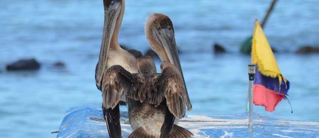 Galapagos, Connaisseurs du voyage, Tours du Monde