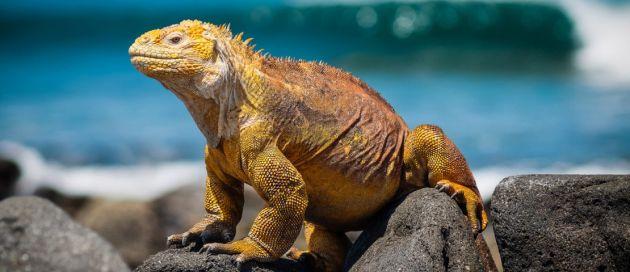 A la découverte de l'Equateur & des îles Galapagos