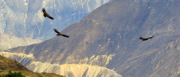 Canyon du Colca, A la découverte du Pérou
