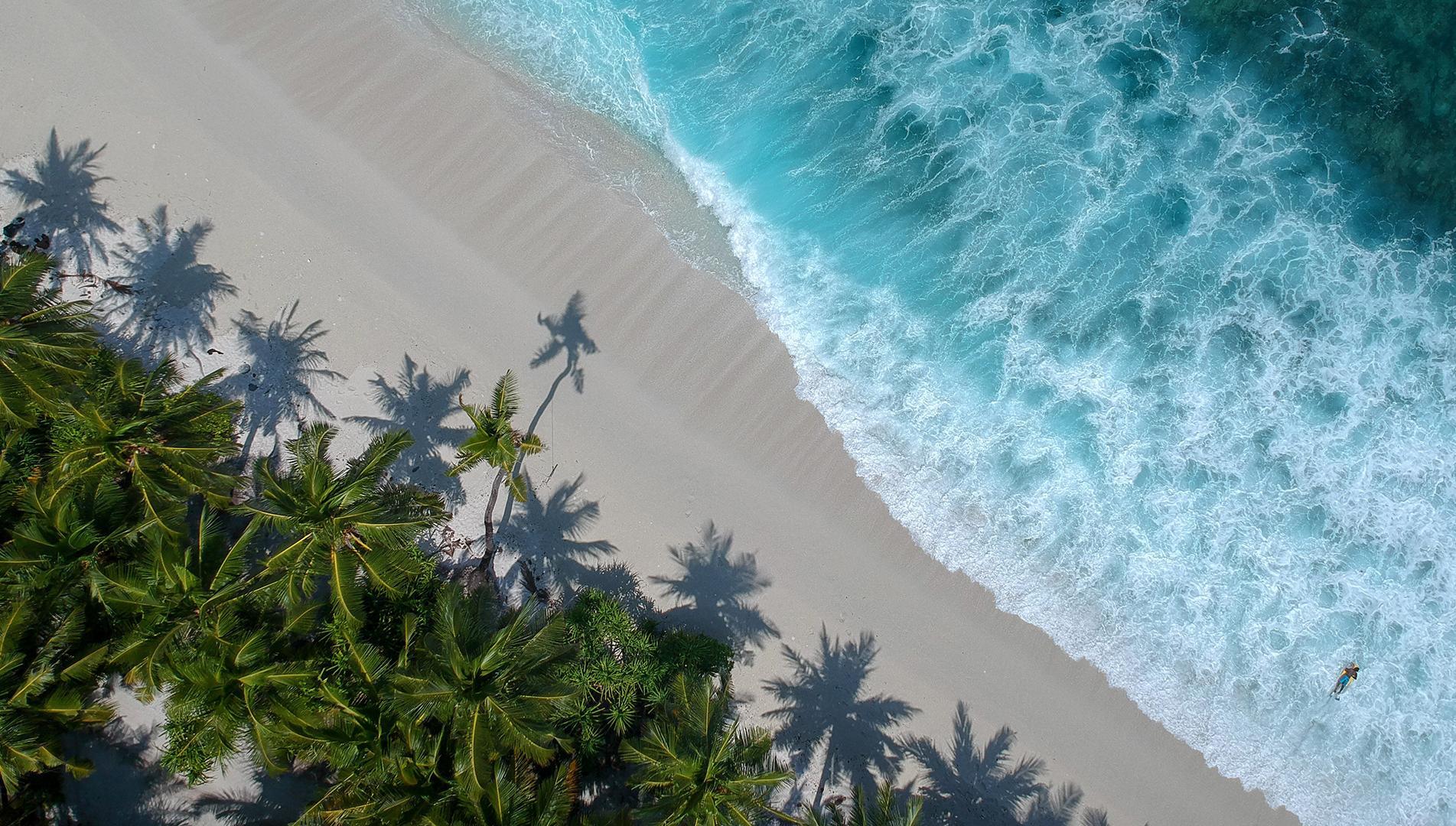 plage-palmier